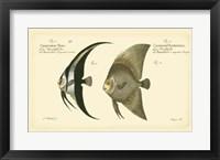 Framed Antique Fish IV
