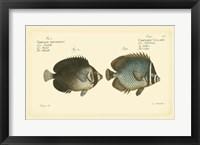 Framed Antique Fish V