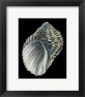 Framed Treasures of the Sea III