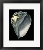 Framed Treasures of the Sea VI