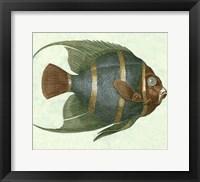 Framed Angel Fish I