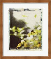 Framed Blackeyed Susans III
