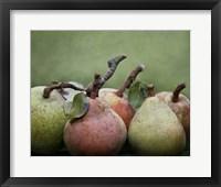 Framed Comice Pears I