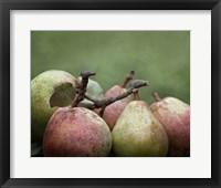 Framed Comice Pears II