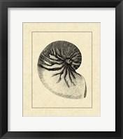 Framed Vintage Shell I