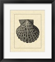 Framed Vintage Shell II