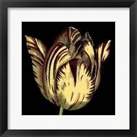 Framed Dramatic Blooms V