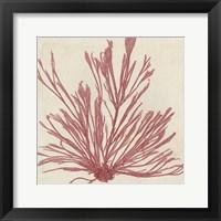 Framed Brilliant Seaweed IX