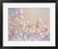 Framed Flowering Dogwood II