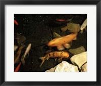 Framed Goldfish Pond I