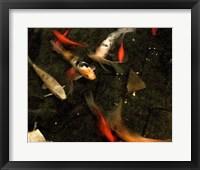 Framed Goldfish Pond II