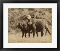 Framed Lone Star Cows II