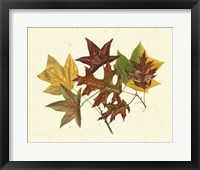 Framed Tulip Tree, Sweet Gum & Scarlet Oak
