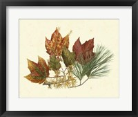 Framed Red Maple, Tamarack & White Pine
