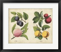 Kitchen Fruits I Framed Print