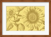 Framed Golden Sunflowers I