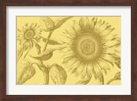 Framed Golden Sunflowers I