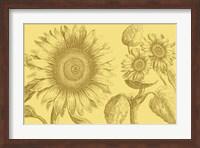 Framed Golden Sunflowers II