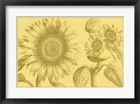 Framed Golden Sunflowers II