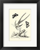 Framed B&W Longtailed Hummingbird  (1742)