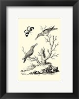 Framed B&W The Hummingbirds (1742)