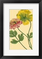 Framed Ranunculus I