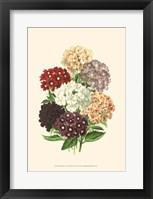 Framed Bountiful Bouquet I