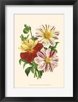 Framed Bountiful Bouquet III