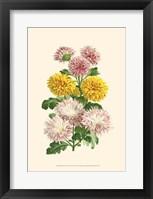Framed Bountiful Bouquet V