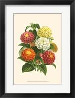 Framed Bountiful Bouquet VI