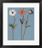 Framed Three Daisies