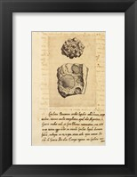 Shell Series I Framed Print