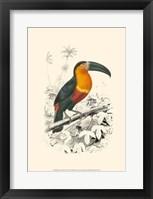 Framed Birds of Costa Rica I