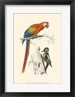 Framed Birds of Costa Rica III