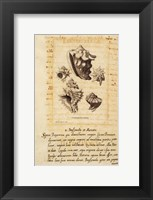 Shell Series III Framed Print