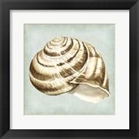 Framed Sea Dream Shells I