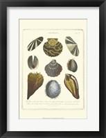 Framed Conchology Collection I