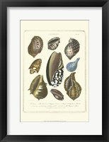 Framed Conchology Collection II