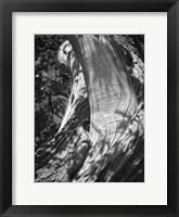Framed Texture
