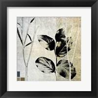 Framed Leaves & Stems I