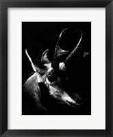 Framed Wildlife Scratchboards II