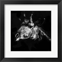 Framed Wildlife Scratchboards VI