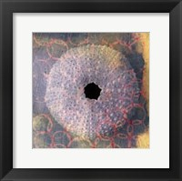 Framed Seashell-Urchin