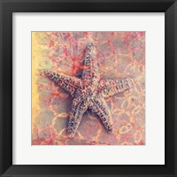 Framed Seashell-Starfish