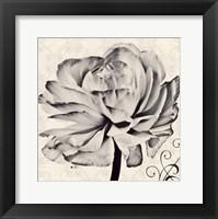 Framed Ghost Flower II