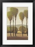 Framed Tall Birches II