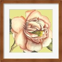 Framed Flower Power I