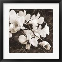 Framed Orchid & Swirls II