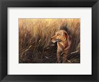 Framed Golden Grass