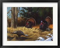 Framed Turkies